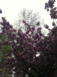 Bloomin' Blossoms!