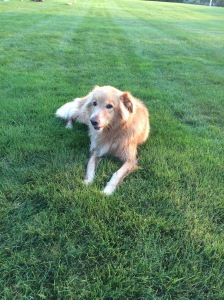 Zeke on National Dog Day!